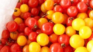 二次発酵後すぐに焼かずに冷蔵庫に入れたらどうなったか…そしてプチトマト